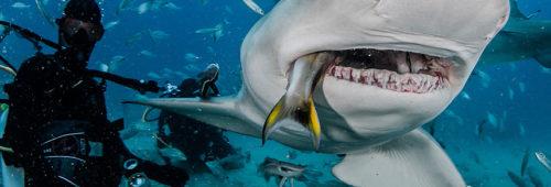 shark-lemon-1_3011040k